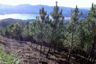 La Xunta rescinde 22 convenios con montes vecinales en lo que va de año