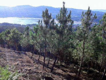 A Xunta rescinde 22 convenios con montes veciñais no que vai de ano
