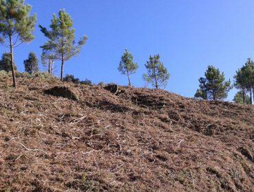 A Comunidade de Montes do Viso, un exemplo na prevención de lumes forestais