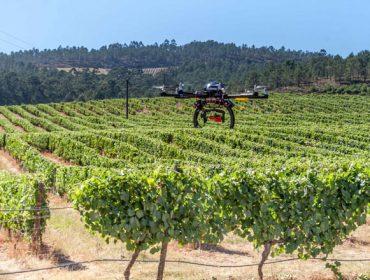 Investigadores galegos estudan como adaptar os robots á viña