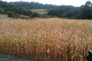 No que vai de setembro nas provincias da Coruña e de Lugo choveu menos do 10% dun ano normal