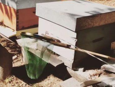 Nuevo invento para capturar Vespa Velutina en las colmenas