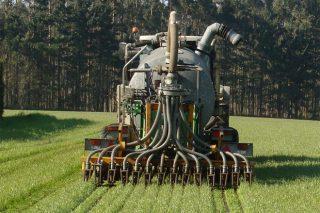 ¿Cómo mejorar los cultivos de maíz y hierba con un uso más eficiente del nitrógeno?
