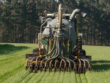 ¿Como mellorar os cultivos de millo e herba cun uso máis eficiente do nitróxeno?