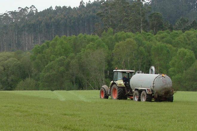 O Goberno propón unha redución de emisións de amoníaco que castiga ao sector de vacún