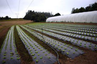 Axudas para investimentos en explotacións de horta, patacas e froiteiras