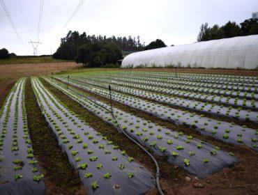 Ayudas para inversiones en explotaciones de huerta, patatas y frutales