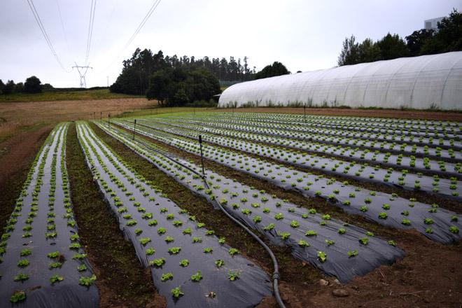 Axudas para produtores de horta, froiteiras e pataca