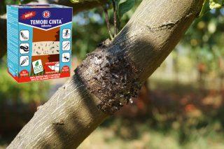 Impex Europa lanza unha cinta antiinsectos, especial para árbores, establos e industrias alimentarias