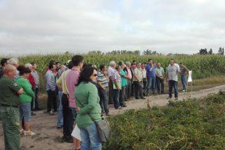 Jornada en A Limia sobre avances en fertilización eficiente del cultivo de la patata