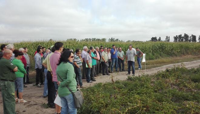 Xornada na Limia sobre avances en fertilización eficiente do cultivo da pataca