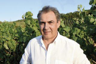 A vendima en Valdeorras finaliza cun 15% máis de uva