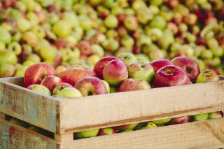 A colleita de mazá de sidra baixará este ano até un 70% en Galicia
