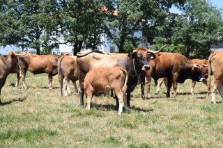 El SLG denuncia demoras de varios días en la recogida de cadáveres animales en las granjas de Ourense