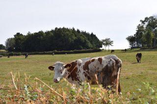 Unións pide a la Xunta que no retenga el pago de la PAC a los productores