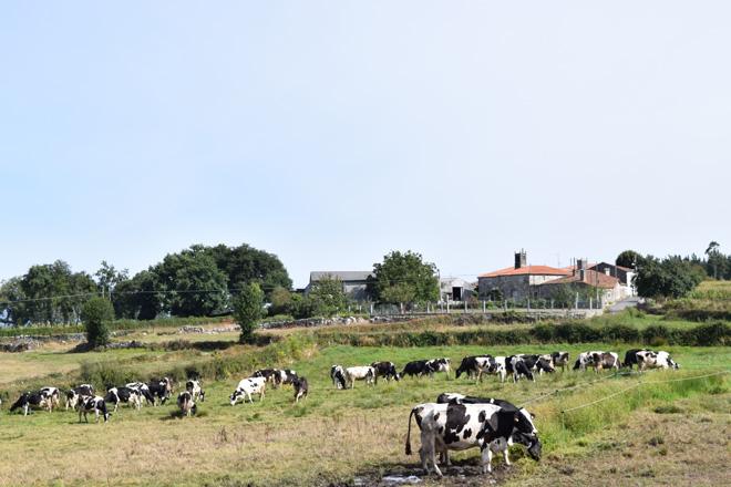 Os gandeiros galegos recibirán 123 millóns da PAC na primeira quincena de decembro