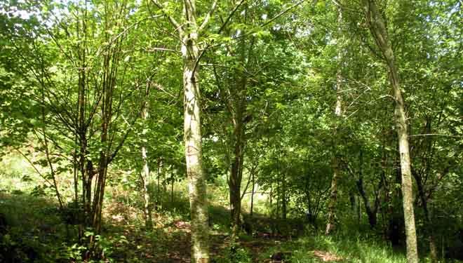Teis, el monte vecinal que apostó por transformarse en un bosque