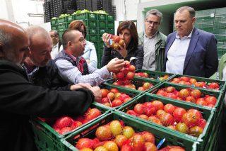 La Xunta trabaja en la creación de una marca de calidad para la huerta de Galicia