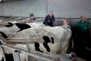 Mazaricos imparte por primeira vez un curso de inseminación de vacas