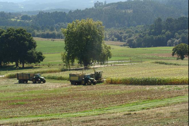 Influencia da seca no rendemento e no valor nutricional do millo forraxeiro