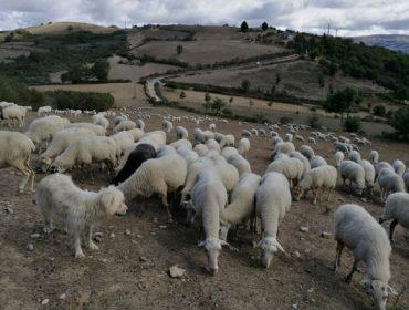 A Xunta valora medidas de apoios ós produtores máis afectados pola seca