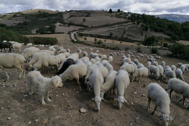 La Xunta valora medidas de apoyo a los productores más afectados por la sequía
