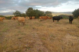 Axudas de Europa para os gandeiros afectados pola forte seca