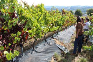Viticultores participan en Lugo nun curso sobre virus en viñedo