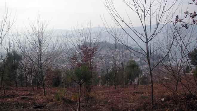 Vista de la Ría de Vigo desde el monte vecinal.