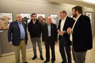 La Diputación de Lugo destina 172.000 € a la recría y mejora genética de la raza Rubia Gallega