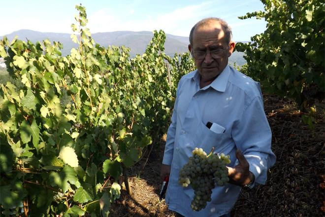 Bioca: el vino Godello más premiado del mundo - Campo Galego
