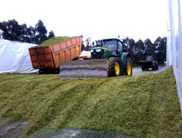Dez preguntas sobre o silo de millo