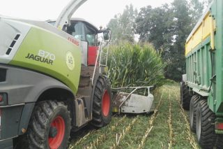 Vídeos e imaxes da recta final do ensilado do millo en Galicia
