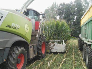 Un método sinxelo para comprobar se o millo está ben picado