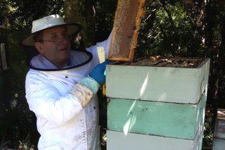 """""""O apicultor ten que diversificar: ademais do mel, o pole ou o propóleo son moi demandados"""""""