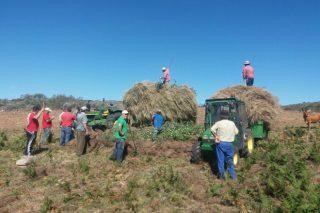 Xornada técnica sobre estratexias contra o abandono no medio rural