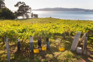 As mellores imaxes da vendima 2017 en Galicia