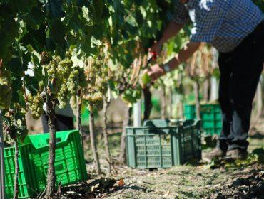 Axudas para produtores de nova participación en selos de calidade