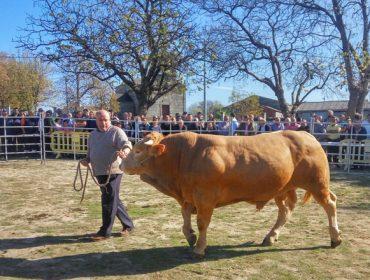 A Feira de Adai xunta esta fin de semana o mellor gando cabalar e vacún de Galicia