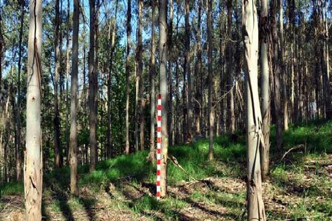 FSC organiza unha xornada formativa en Lugo sobre xestión forestal e cadea de custodia