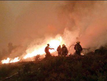 Petición de un plan para la restauración de áreas forestales quemadas