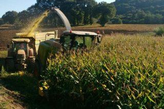 Mouriscade proba unha tecnoloxía de ensilado que melloraría a rendibilidade das granxas