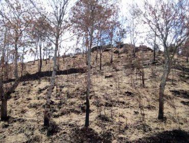 Primeras acciones para evitar la erosión del monte tras los fuegos