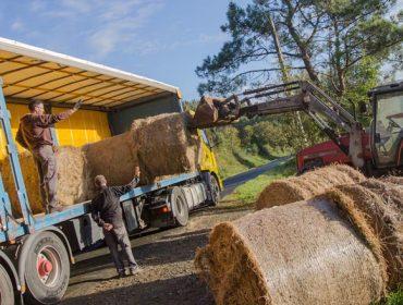 Ganaderos de Prolega envían gratis forraje a ganaderías afectadas por los incendios