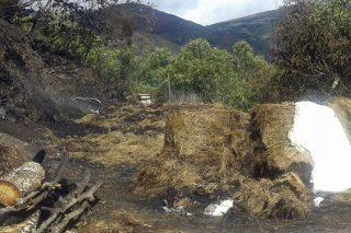 Lumes forestais: A Xunta anuncia axudas para gandeiros e agricultores afectados