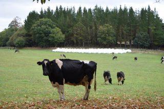 Prezos estandarizados do leite, a comparativa real entre Galicia, España e Europa