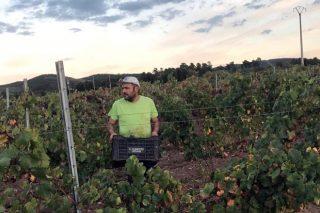 'Setembro', vinos nobles orientados a la calidad