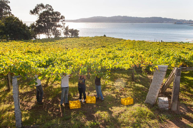 Os viños de Rías Baixas aumentan a súa cota de mercado en España