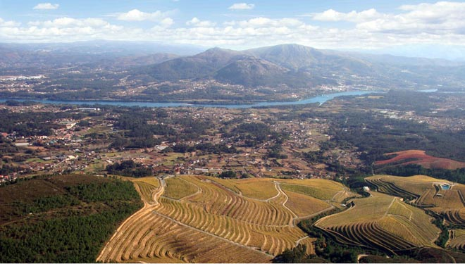 Altos de Torona, the largest vineyard in Rías Baixas