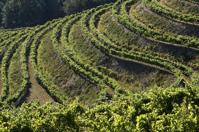 ¿Qué requisitos han de cumplir los llamados vinos de pago?